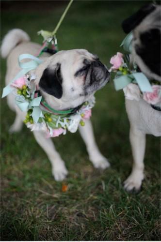 Svadobné mopsíky...alebo Bez psíka sa nevydávam :) - Obrázok č. 24