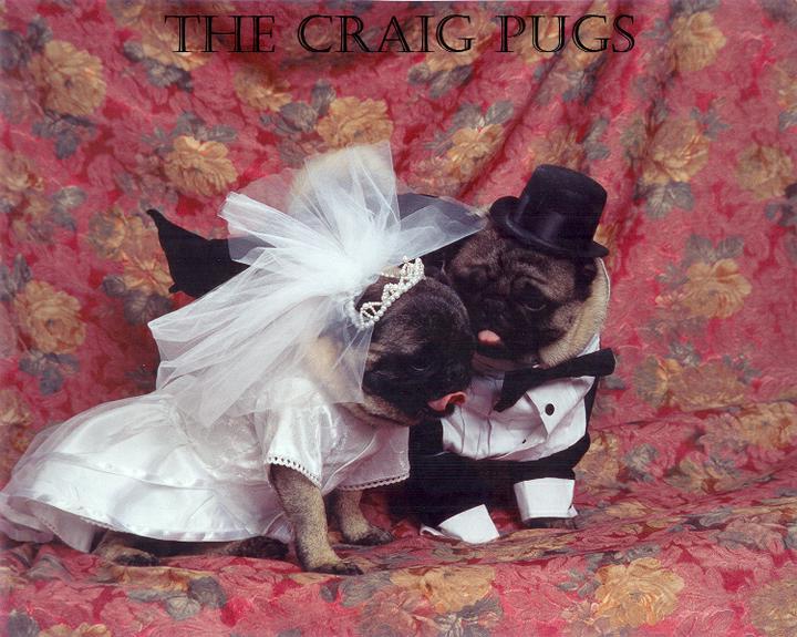 Svadobné mopsíky...alebo Bez psíka sa nevydávam :) - Obrázok č. 4