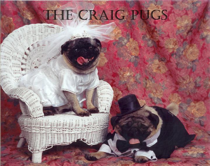 Svadobné mopsíky...alebo Bez psíka sa nevydávam :) - Obrázok č. 3