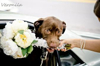 Pejsek zastupuje chief bridesmaid v drzeni kytky :)
