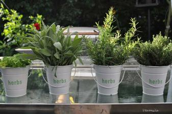 Moje bylinky - parsley, sage, rosemary & thyme :)