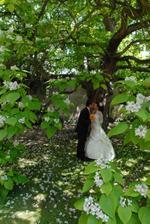 pod rozkvetlym stromem, aspon trochu stinu!