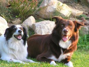 Tak tohle jsou naše dvě zlatíčka - Levi Strauss (český zámecký pes alias voříšek) a Rocky (border kolie)