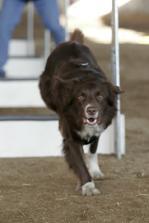 Rocky běží přes překážky pro míček