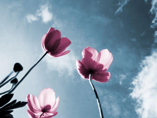 KRÁSNÉ OBRÁZKY NA SVATEBNÍ OZNÁMENÍ - Tulipány