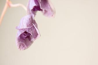 na objednávku pro milovnici orchideí