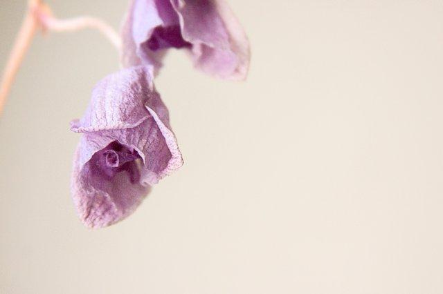 KRÁSNÉ OBRÁZKY NA SVATEBNÍ OZNÁMENÍ - na objednávku pro milovnici orchideí