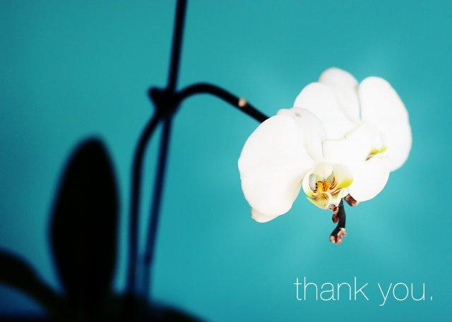 KRÁSNÉ OBRÁZKY NA SVATEBNÍ OZNÁMENÍ - na objednávku pro milovnici orchideí ii.
