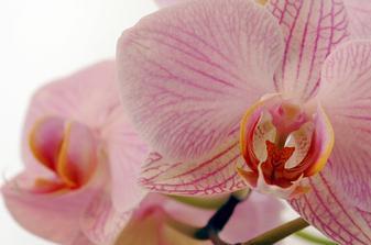 na objednávku pro milovnici orchideí III.