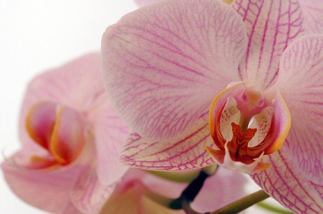 KRÁSNÉ OBRÁZKY NA SVATEBNÍ OZNÁMENÍ - na objednávku pro milovnici orchideí III.