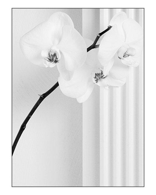 KRÁSNÉ OBRÁZKY NA SVATEBNÍ OZNÁMENÍ - na objednávku pro milovnici orchideí IV.