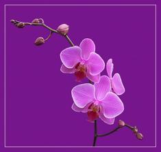 na objednávku pro milovnici orchideí na objednávku pro milovnici orchideí V.