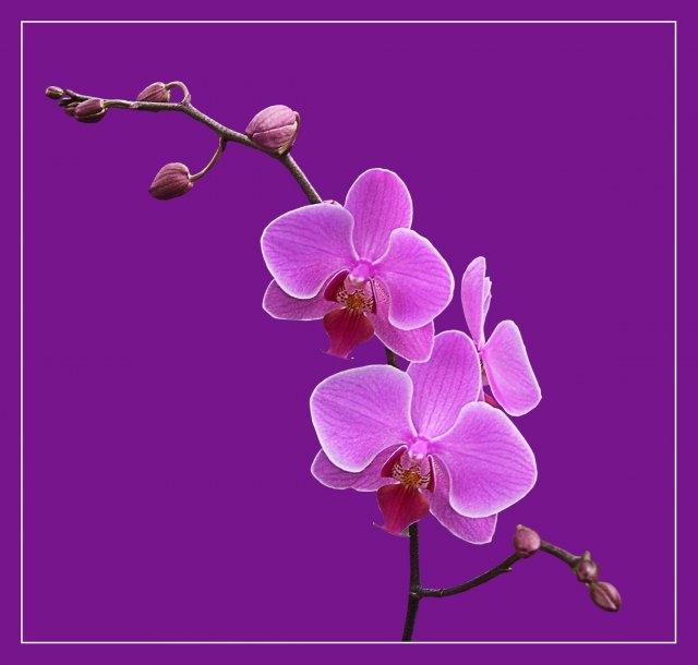 KRÁSNÉ OBRÁZKY NA SVATEBNÍ OZNÁMENÍ - na objednávku pro milovnici orchideí na objednávku pro milovnici orchideí V.