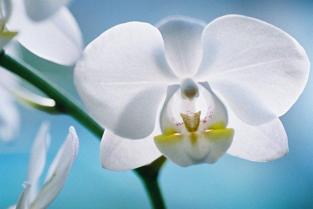KRÁSNÉ OBRÁZKY NA SVATEBNÍ OZNÁMENÍ - na objednávku pro milovnici orchideí VI.