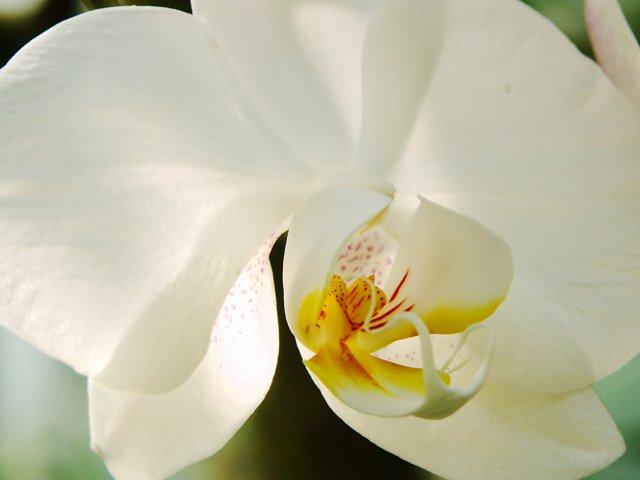 KRÁSNÉ OBRÁZKY NA SVATEBNÍ OZNÁMENÍ - na objednávku pro milovnici orchideí VII.