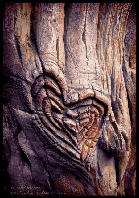 KRÁSNÉ OBRÁZKY NA SVATEBNÍ OZNÁMENÍ - Pro milovníky přírody