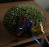 Kokosová skořápka s mechem pod prstýnky,