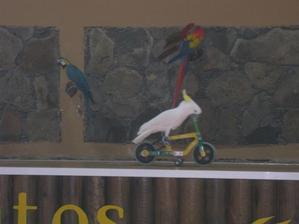 Zábava s papoušky z Palmitos Parku.