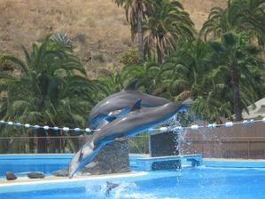 Nádherní delfíni v Palmitos Parku.