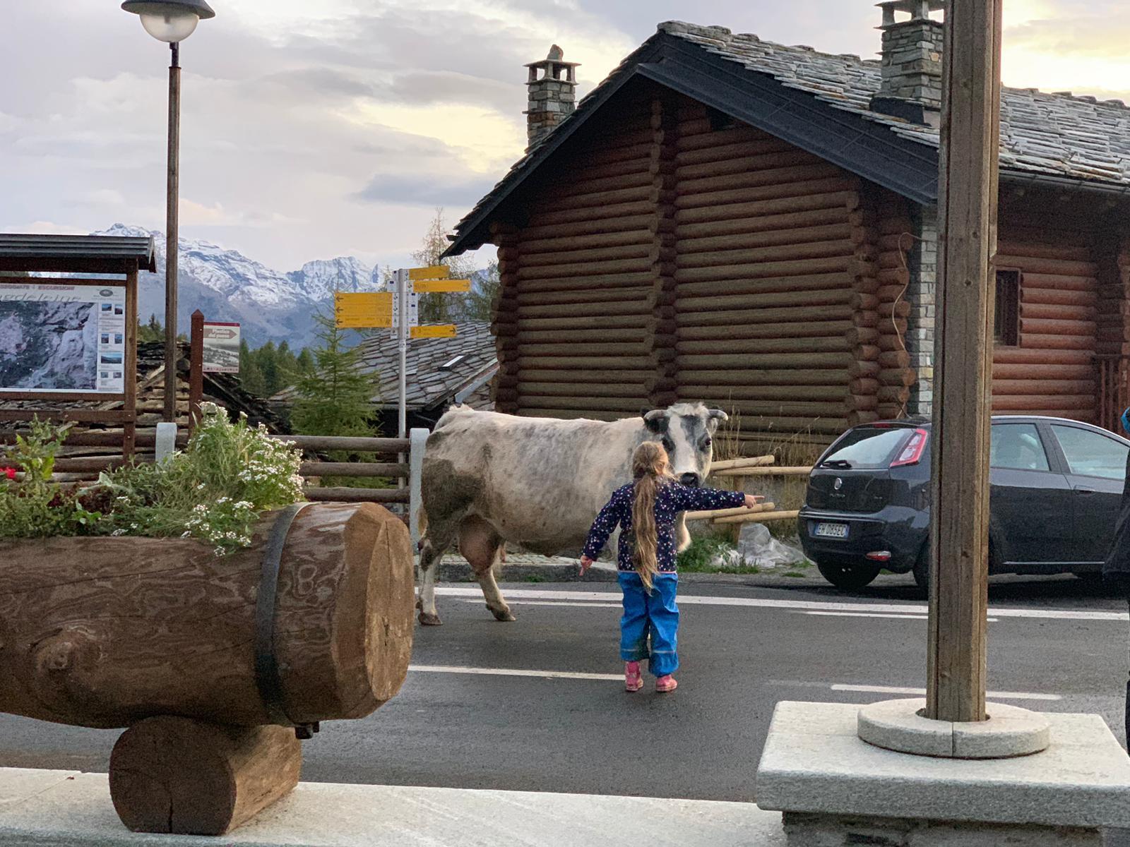 Horsky domcurik - Nase vikendy..dcera usmernuje dopravu:) a Uliva (krava) ju ma V pazi