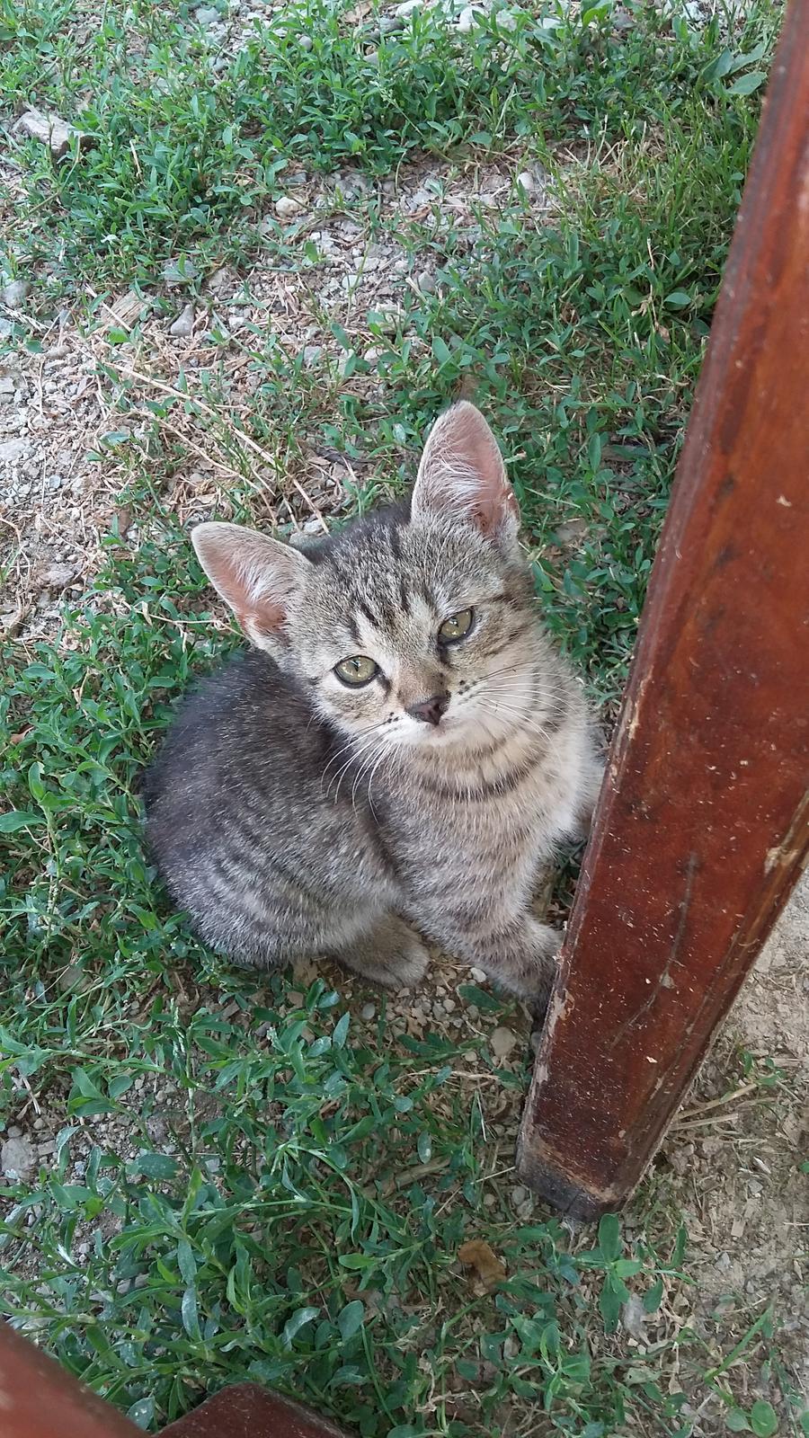 Maciatka - Obrázok č. 1