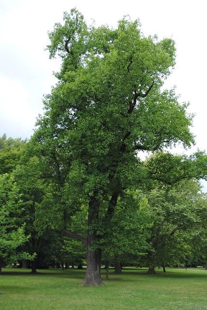 Moje poklady :-) - pod týmto stromom si povieme svoje áno ❤