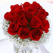 Kvietky, ruze cerveno-biele.