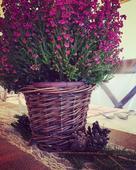 Vintage proutěný květináč ,