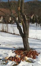 pomrzli nám jabĺčka aj zelenina -35 už nedali