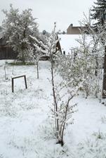hádam to nepomrzne všetko ako vlani, našťastie zo stromov u nás ešte nič nekvitne, len pučí ...