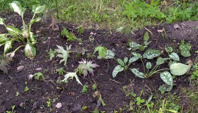 moja tieňová škôlka - rastlinky čerstvo nadobudnuté, nemali kam zatiaľ ísť