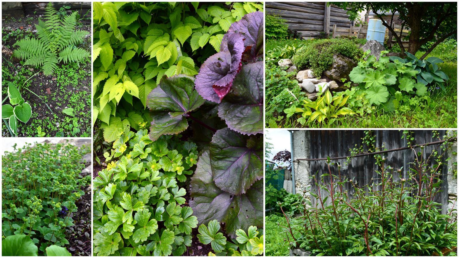 Naša prírodná perma záhradka v roku 2019 - máme veľa tienistých kútov, ale rastlinkám sa tu darí