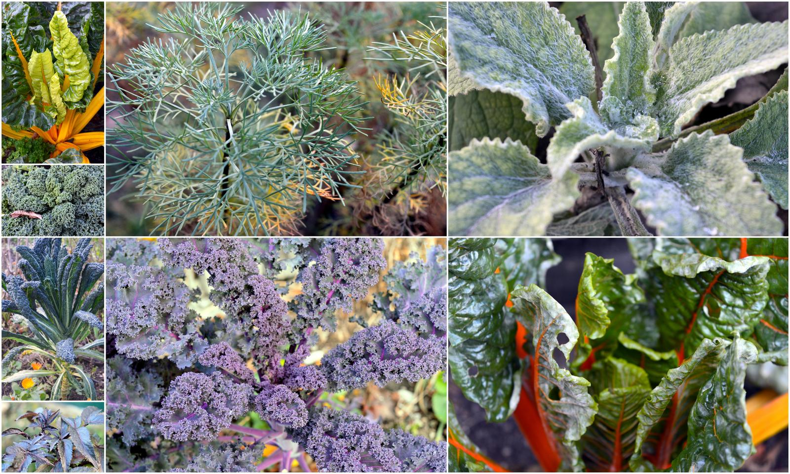 Naša prírodná perma záhradka v roku 2019 - decembrové dekoračné listy