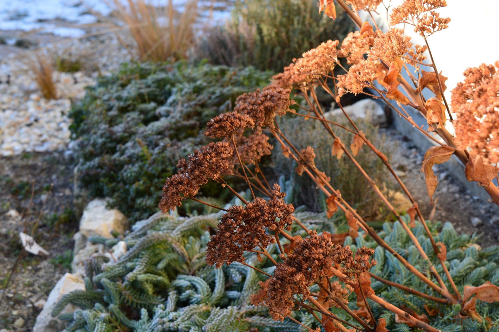 Naša prírodná perma záhradka v roku 2020 - miniskalka je krásna aj v zime