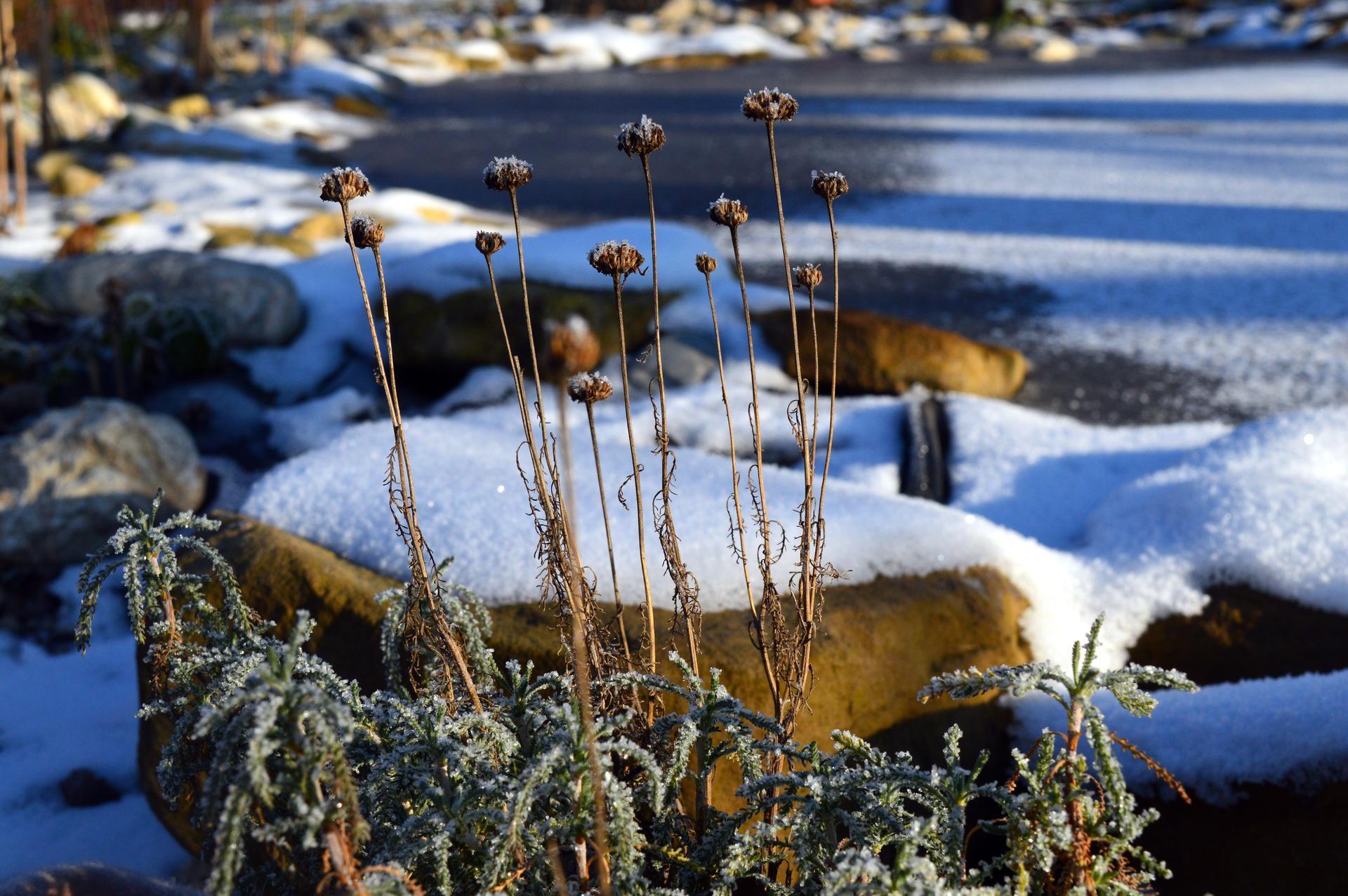 Naša prírodná perma záhradka v roku 2020 - okolie jazierka