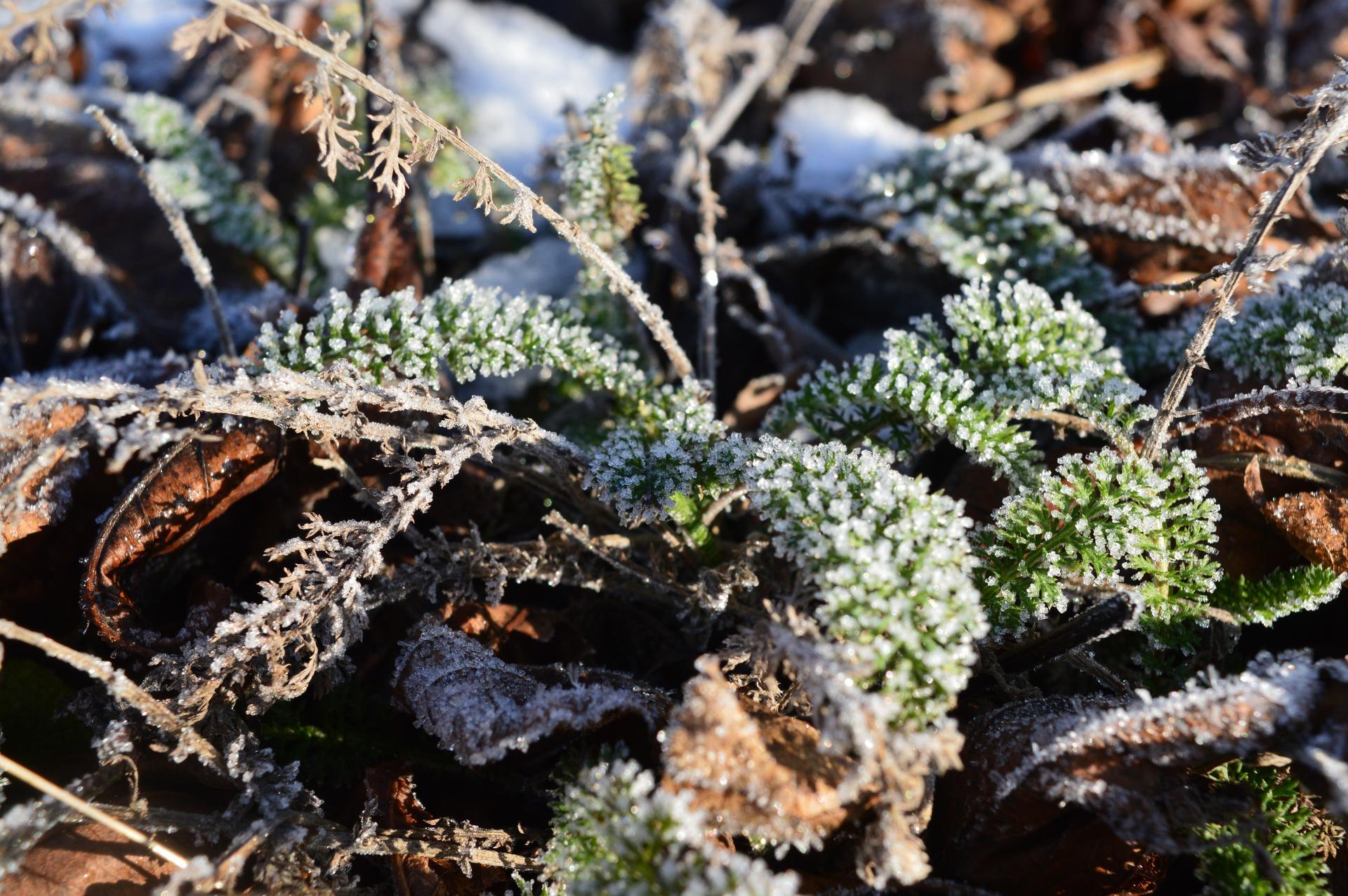 Naša prírodná perma záhradka v roku 2020 - malinové rebríčky