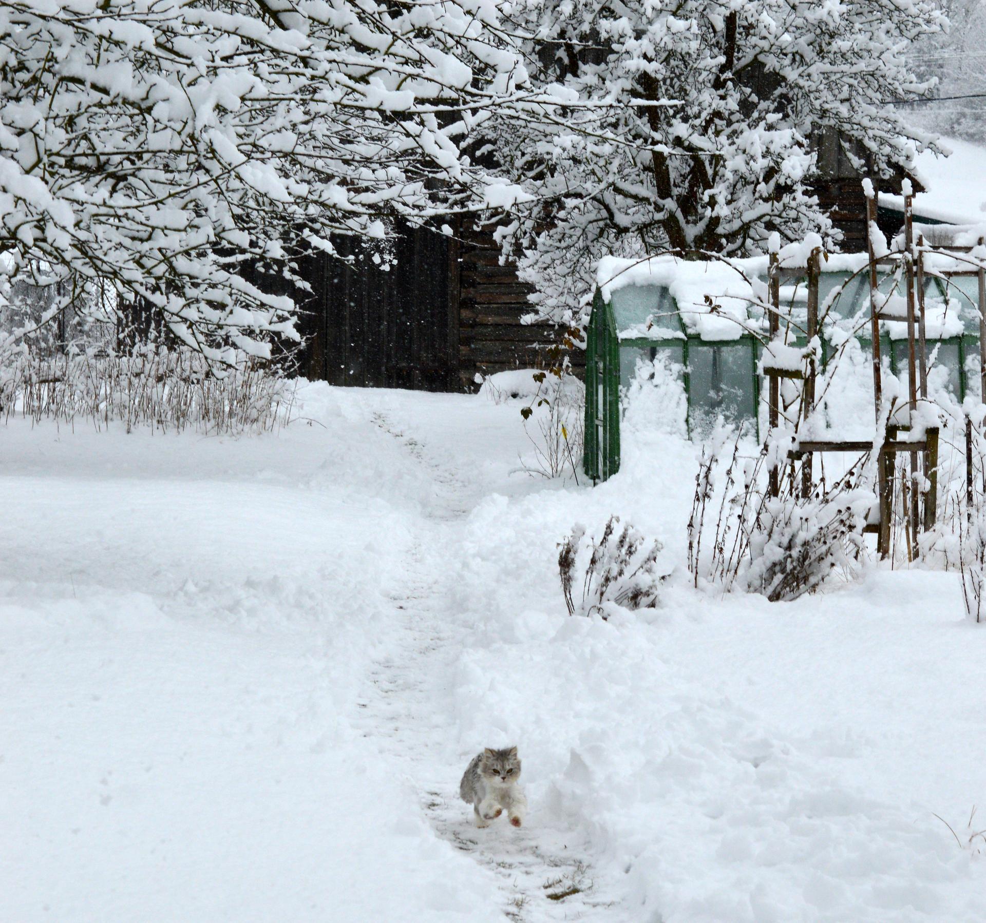 Naša prírodná perma záhradka v roku 2020 - vyletieť na strom, tresnúť do snehu a naháňať sa s Elou, bavilo ho to takmer pol dňa :-)