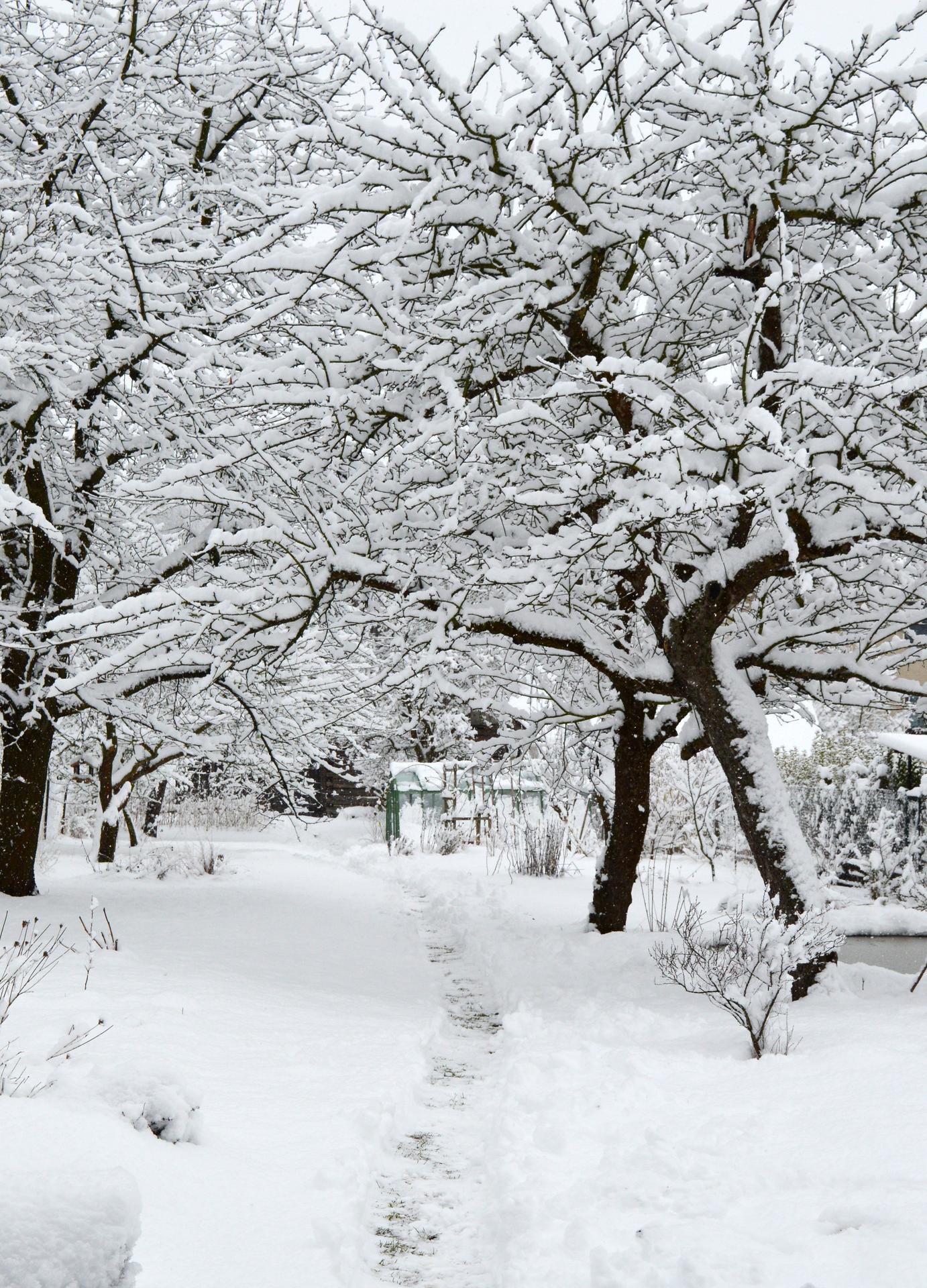 Naša prírodná perma záhradka v roku 2020 - ako z rozprávky, pani Zima sa krásne rozlúčila