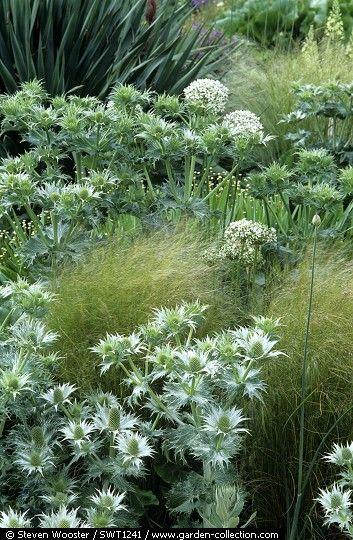Plány 2020, 2021,.... - kotúče, trávy a angelika, príp. divoká mrkva