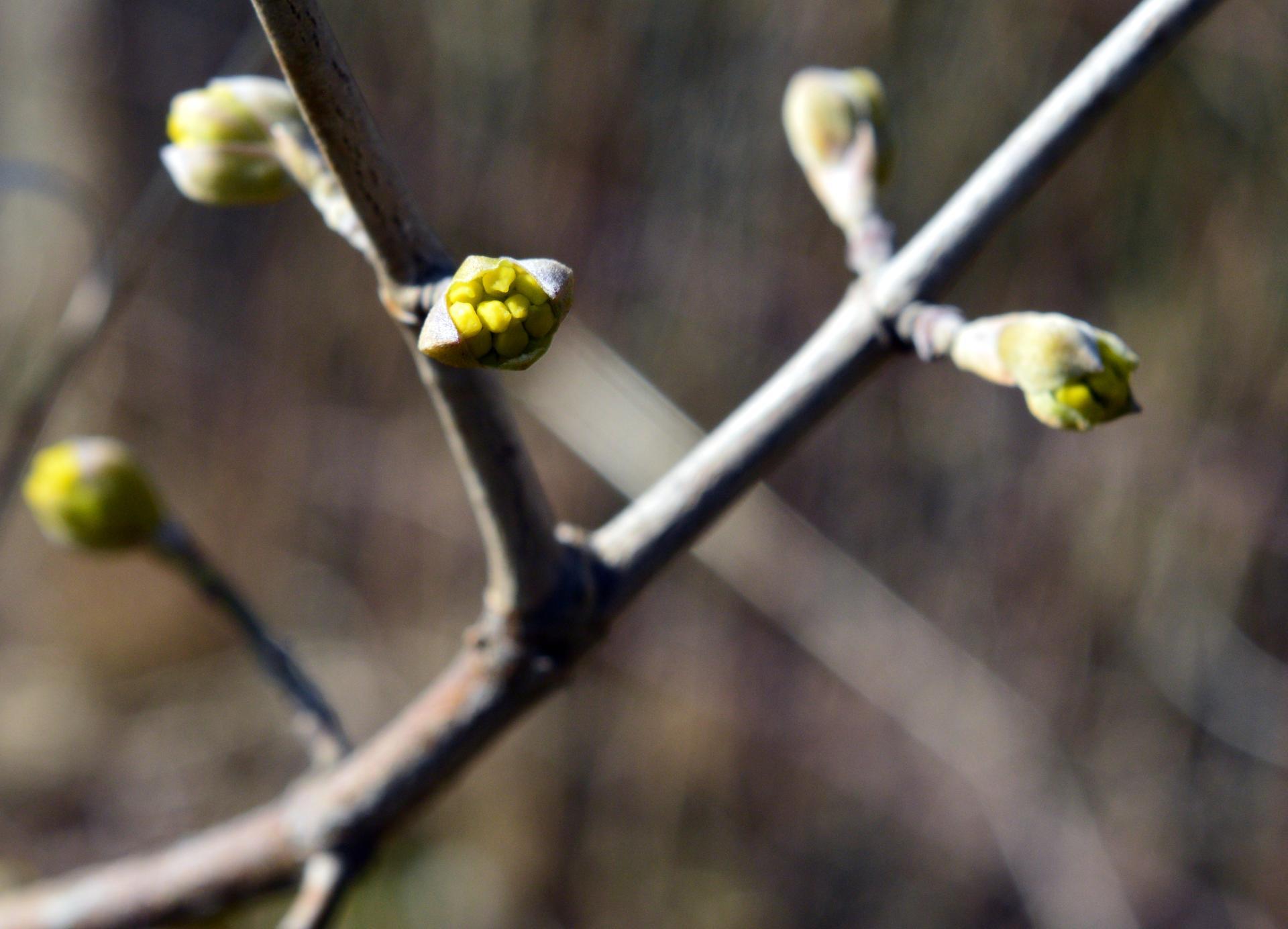Naša prírodná perma záhradka v roku 2020 - drieň. zarodí tohto roku?