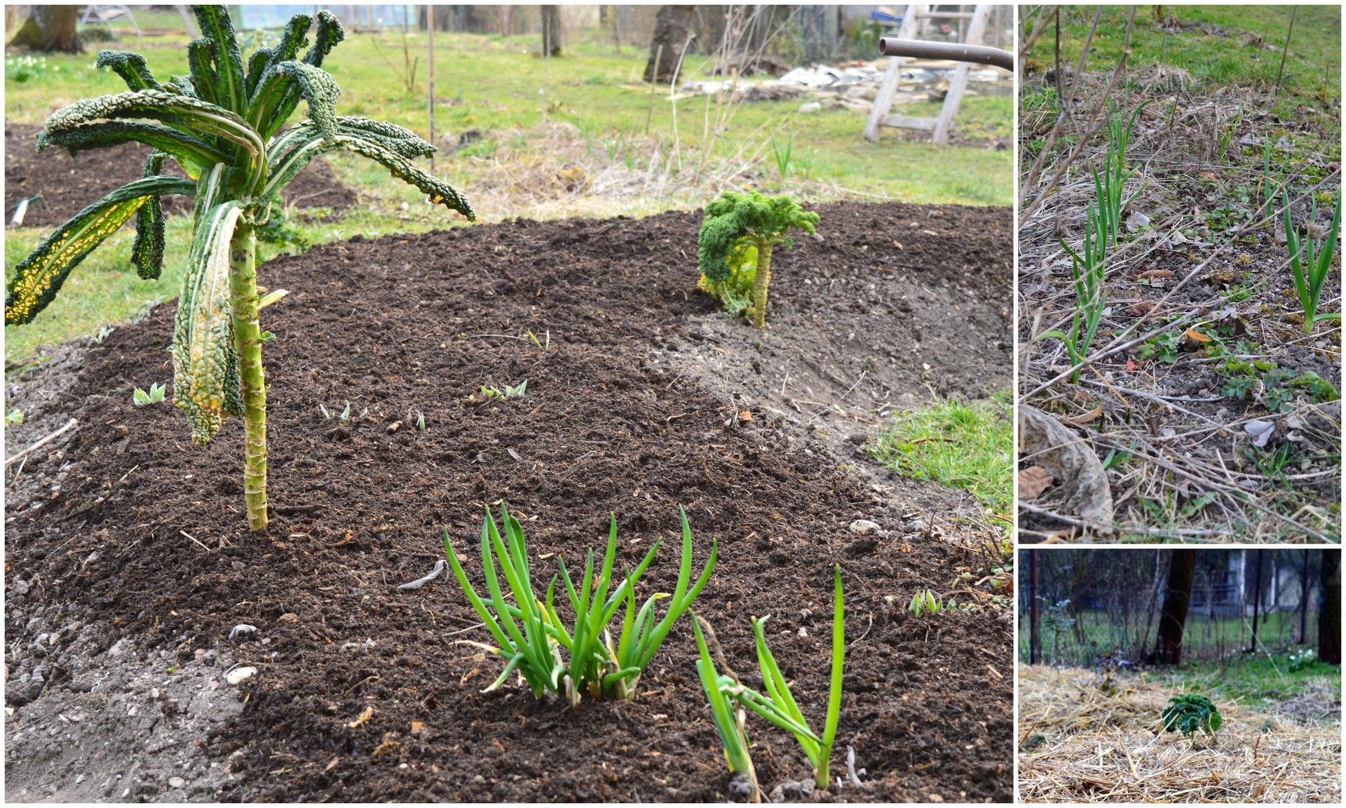 Naša prírodná perma záhradka v roku 2020 - hriadka túning - vyčistiť, vykompostovať, uložiť spinkať