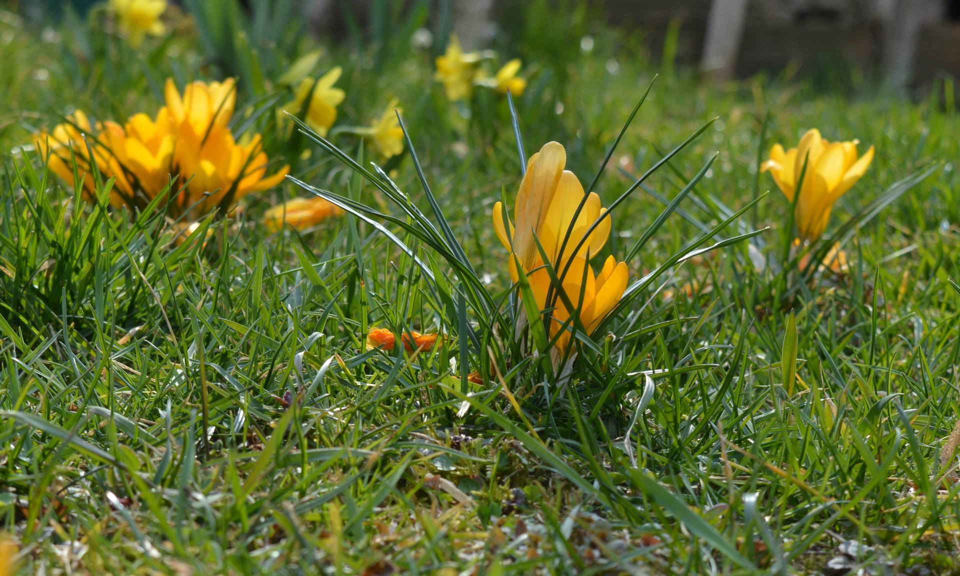 Naša prírodná perma záhradka v roku 2020 - taká trávnatá ...