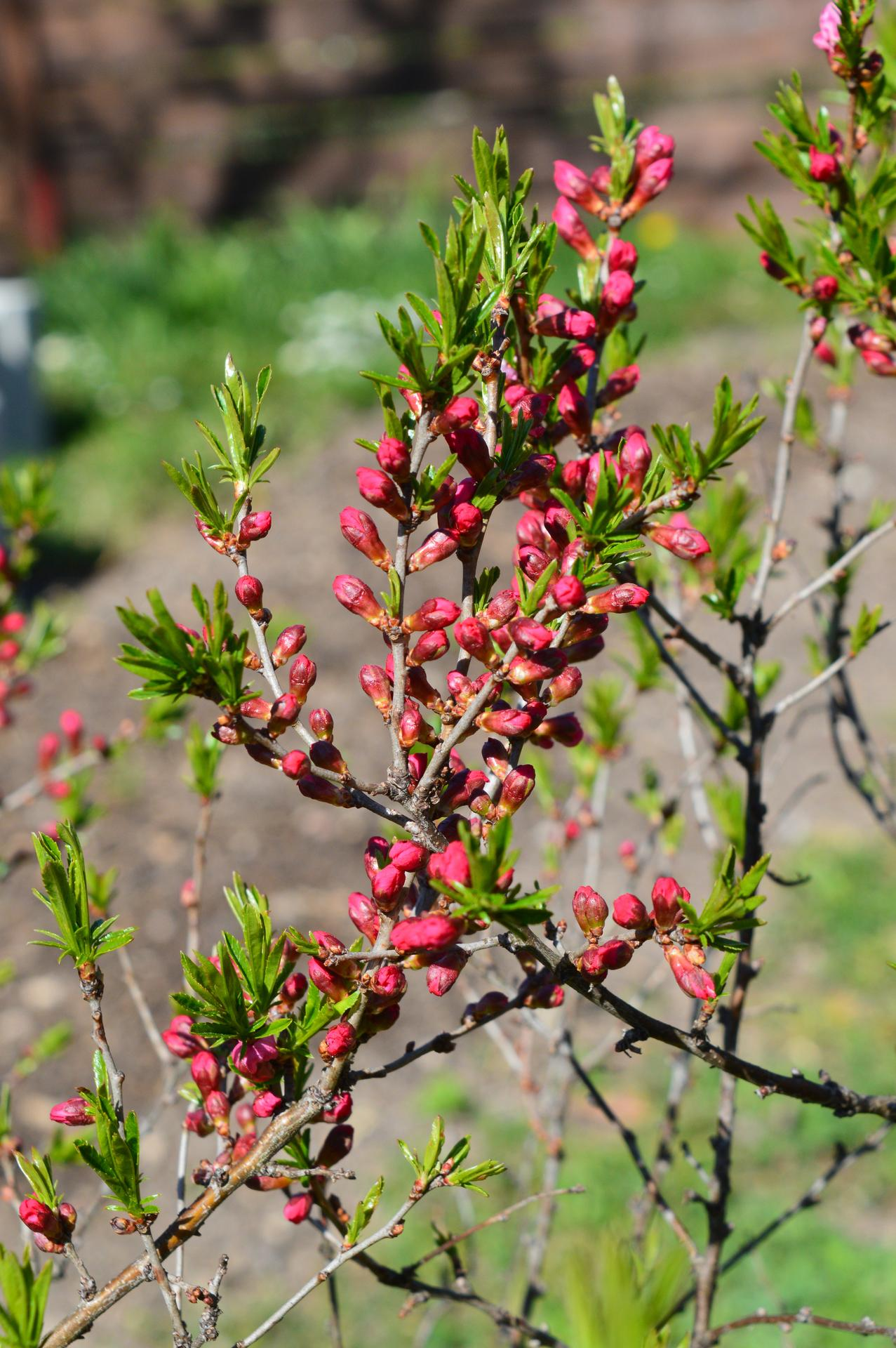 Naša prírodná perma záhradka v roku 2020 - áno, od starej mamy ...