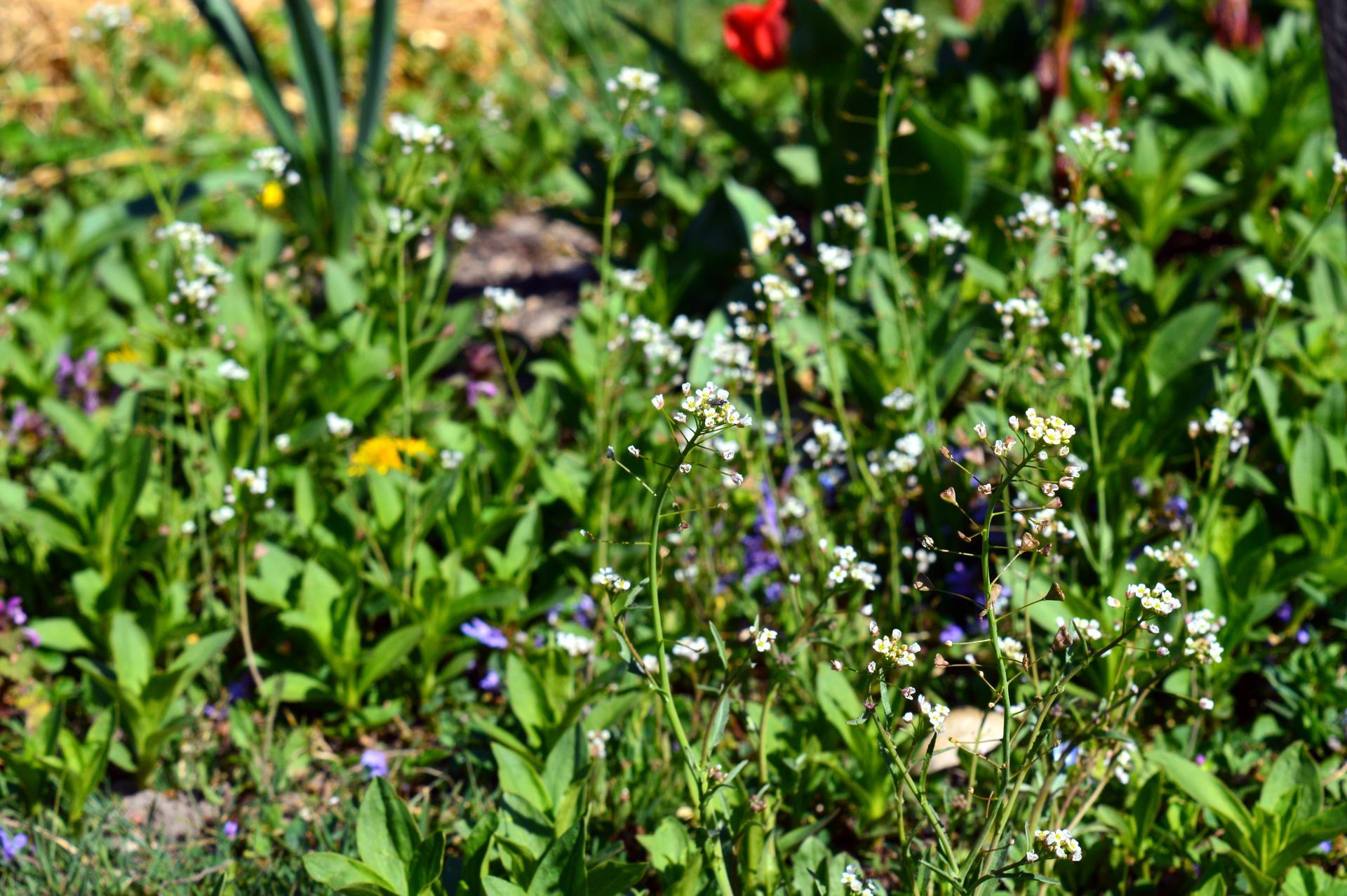 Naša prírodná perma záhradka v roku 2020 - taká trávniková - musí byť