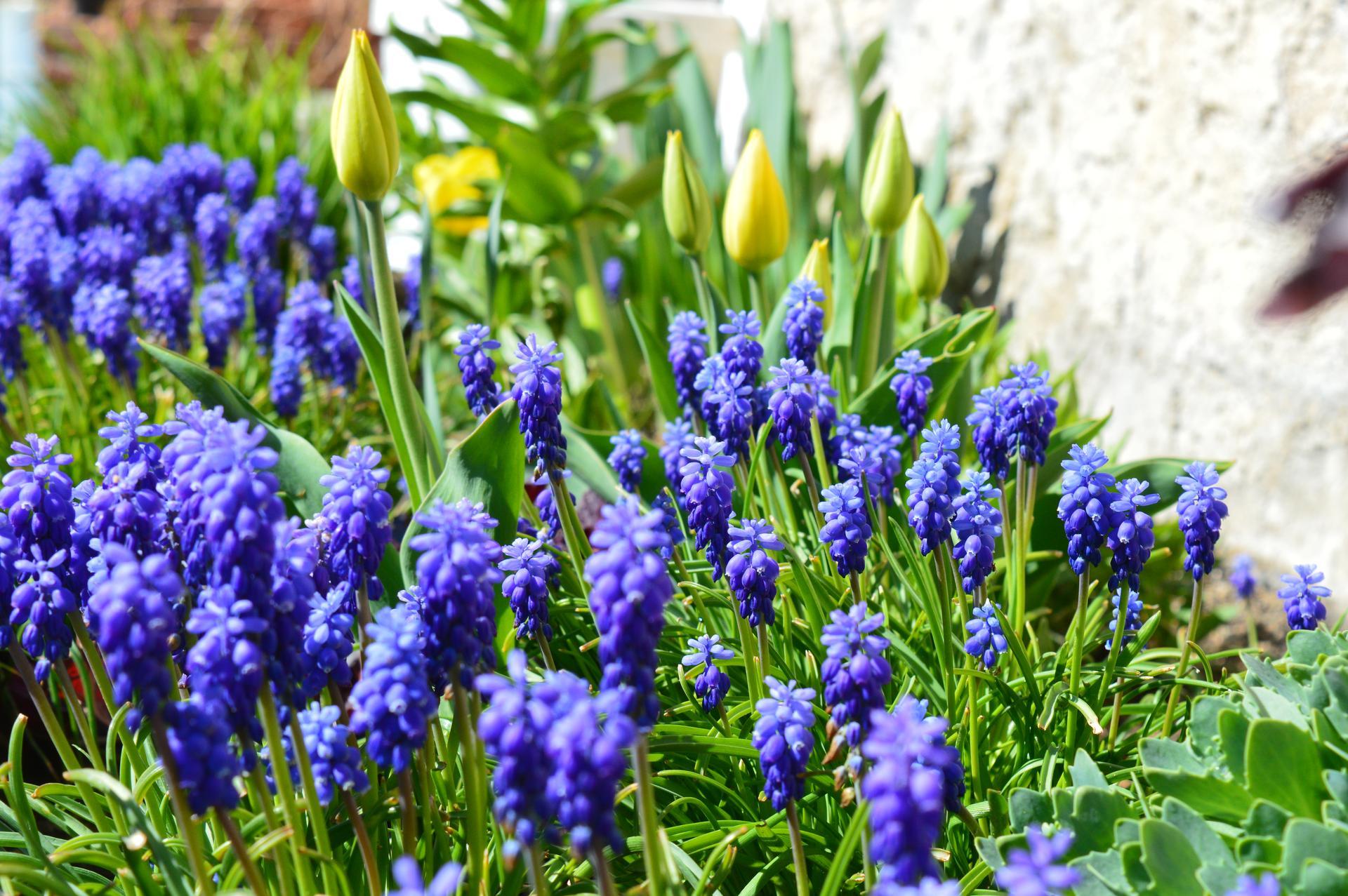 Naša prírodná perma záhradka v roku 2020 - taká modricová ....