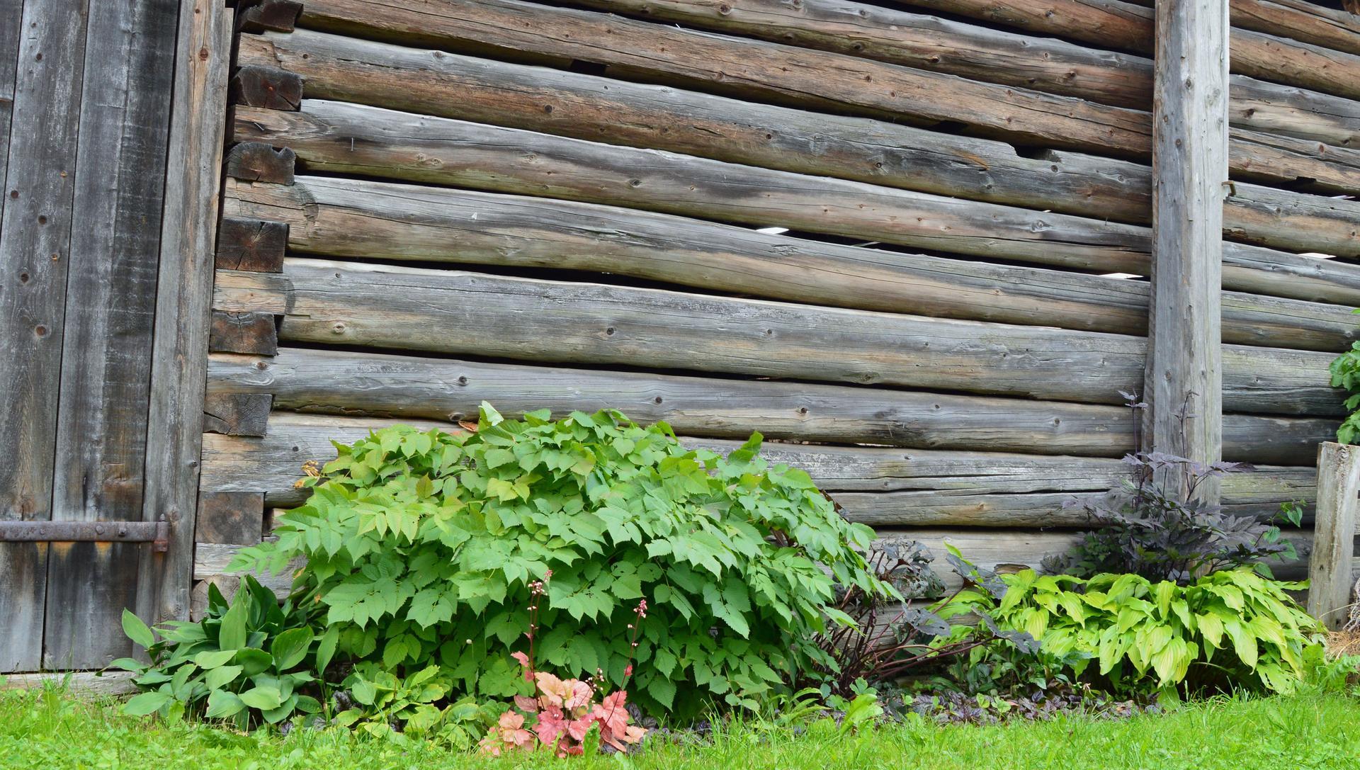 Naša prírodná perma záhradka v roku 2020 - kedysi a dnes: https://www.modrastrecha.sk/blog/ivus78/album/nasa-nielen-permakulturna-zahradka-44mdg9/16731392/