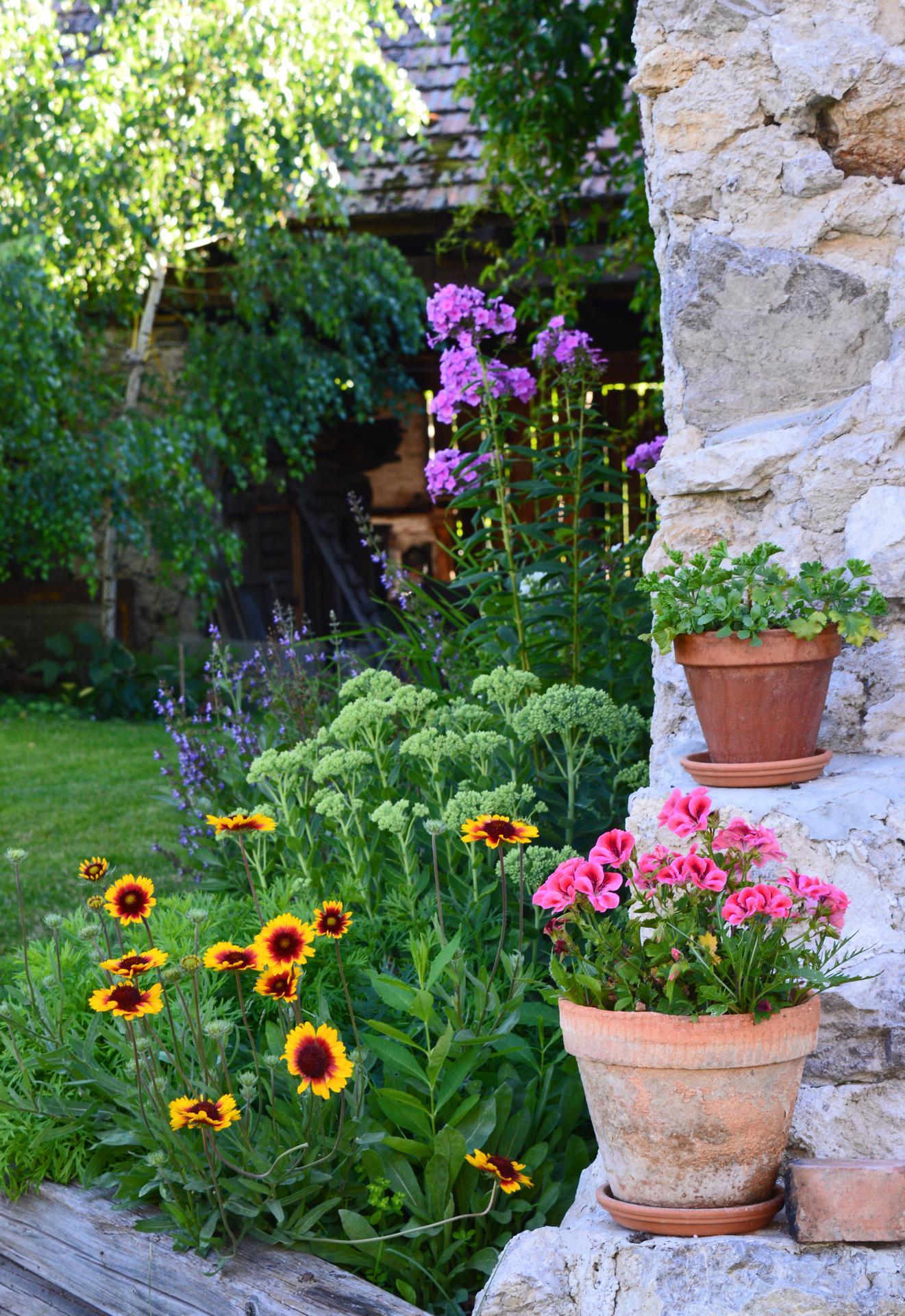 Naša prírodná perma záhradka v roku 2020 - ešte stále júl - šalvia v plnom kvete, kokardy začínajú, rozchodník zatiaľ spí