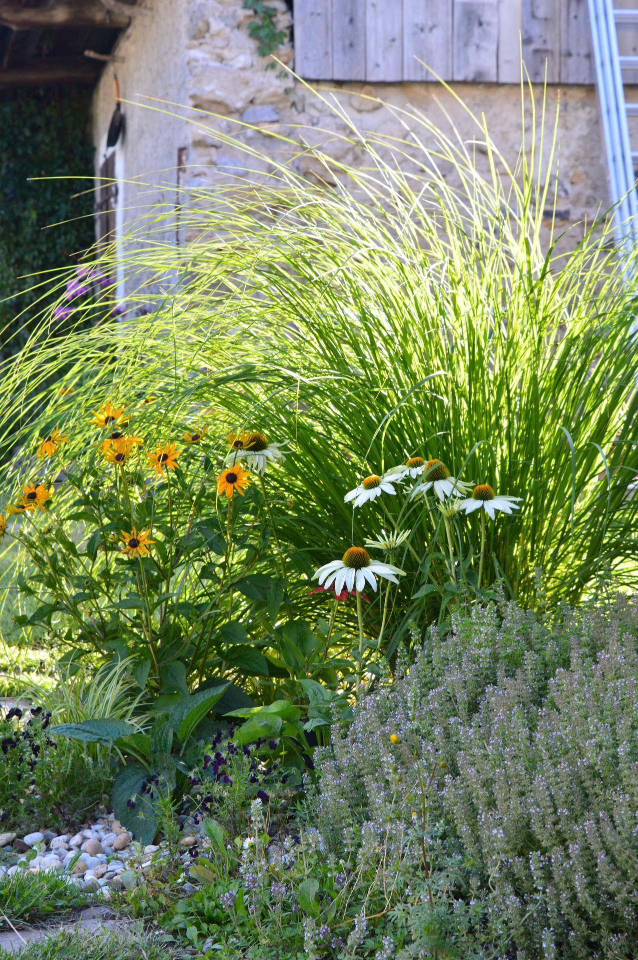 Naša prírodná perma záhradka v roku 2020 - trávy sa tohto roku veľmi rozkokošili. Oba dva trsy (kavyľ aj perovec), ktoré mali byť menšie, značne presiahli meter .... a to ich mám pár rokov, nie sú nováčikmi