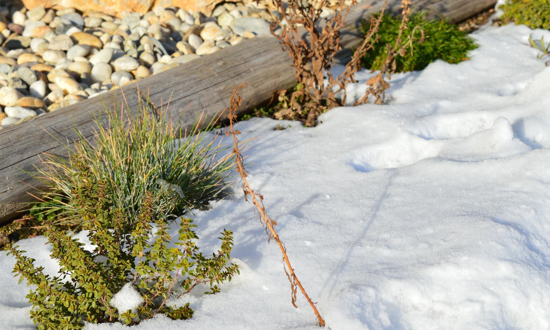 Naša prírodná perma záhradka v roku 2021 - 1/2021 vždyzelené popri múre