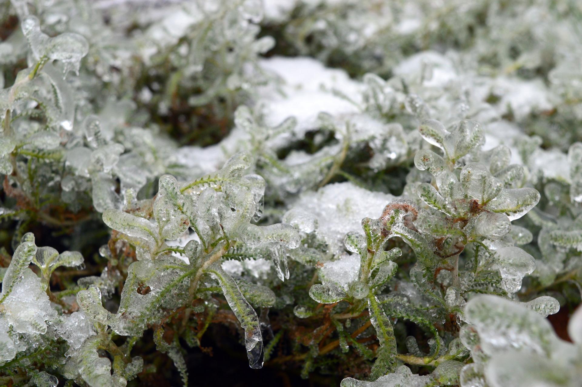 Naša prírodná perma záhradka v roku 2021 - 2/2021 začiatkom februára sme sa zobudili do ľadového kráľovstva, vyblbla sa Elza, vyblbla som sa s foťákom ja. Joj krásne to spomienky na dolniacku zimnú realitu. Tu hore, to bolo po dlhej dobe veľmi krásne, aj príjemné.